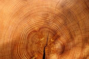 Cajon Bausatz aus Holz oder einfach kaufen?
